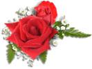 Thumbnail Red Roses Image